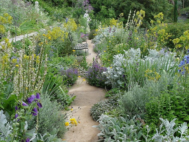 Love this garden path of Perennials and xeric landscaping.