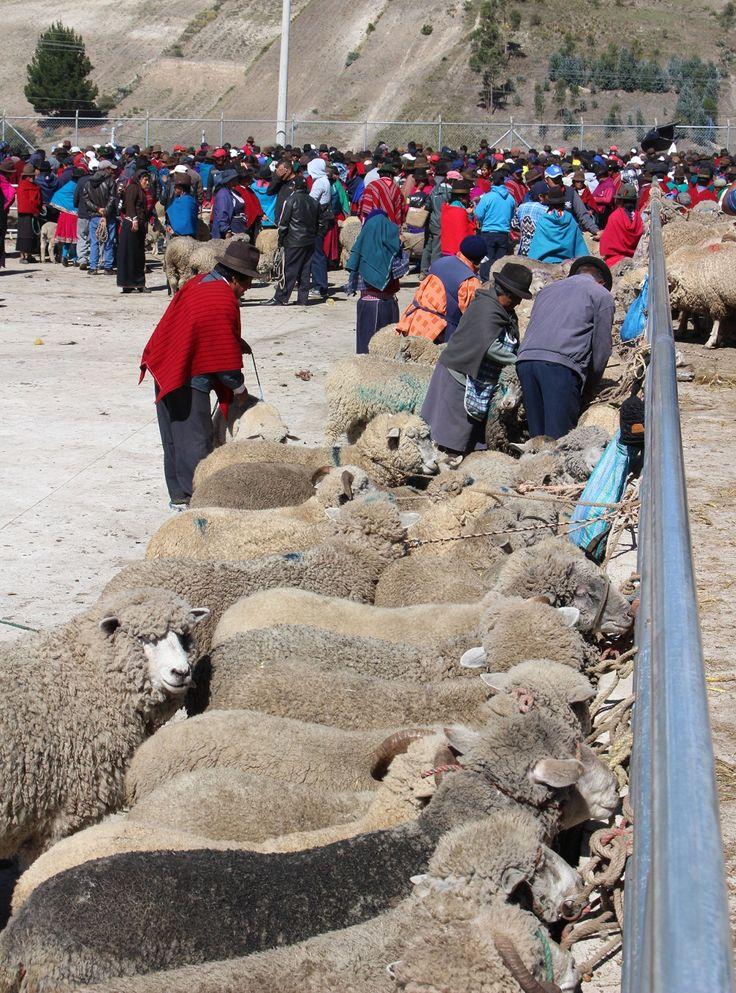 Blog Terra-group. De Quito à Cuenca. Marché de Guamote - Equateur