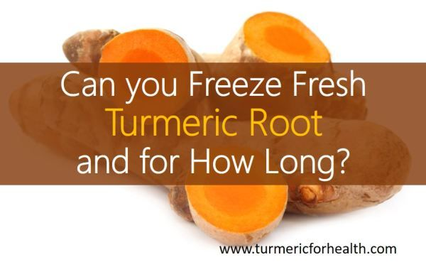 Can you Freeze Fresh Turmeric Root and for How Long? - Yes, fresh turmeric roots can be safely frozen for 3-7 days. This can help you in storing them for a longer time. Fresh turmeric roots contain more of turmeric oil, antioxidants and nutrients compared to …