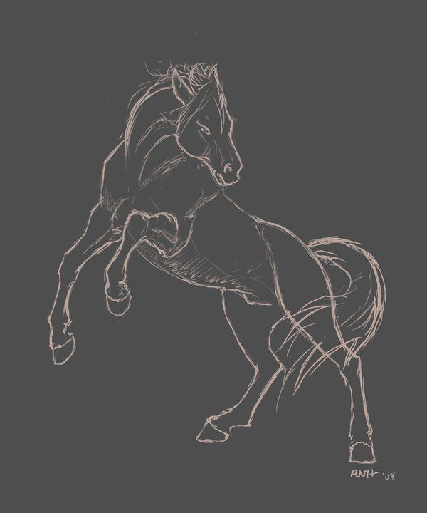 rearing horse drawing | Rearing Horse Sketch by LadyScourgE