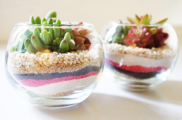 Développer les boutures en terrarium