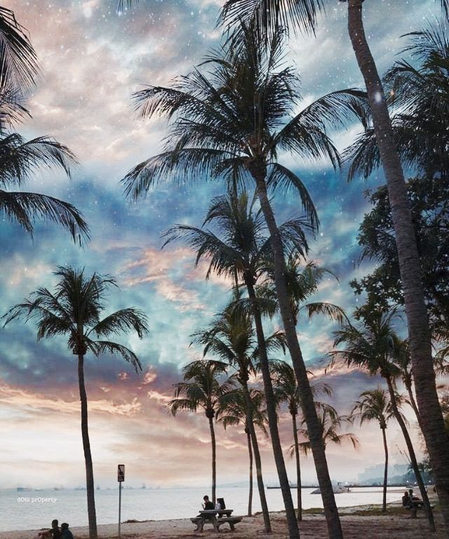 Sunset palms // #perfection #sunset #daydreaming