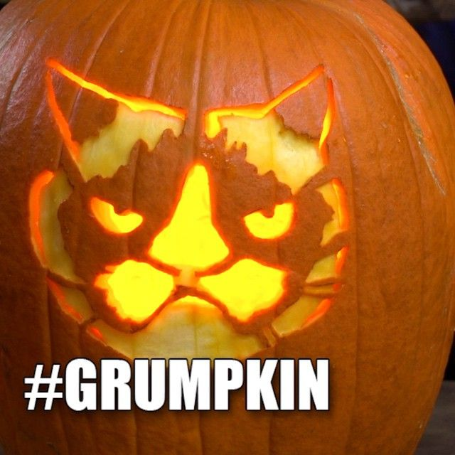 17 best images about grump o lantern on pinterest for Cat carved into pumpkin