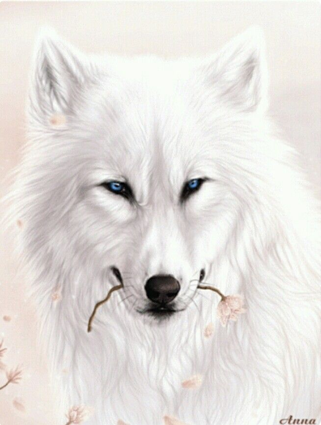 мнемотехники картинки гифы красивые волки описание фото висячих