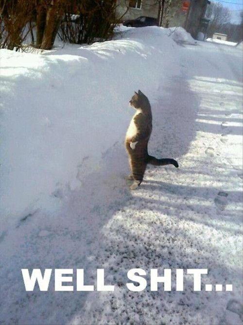 Funny Cat Pictures - 16 Pics | Funny Cat | DomPict.com