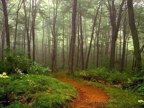 beautiful nature scene woods trees | landscapes | Pinterest ...