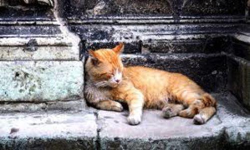 Pétition : Pour la stérilisation et la protection des chats errants
