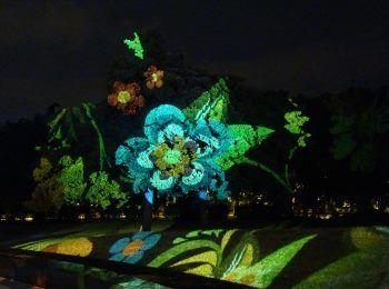 Fák, bokrok - fényfürdő - Night Projection fényfestés