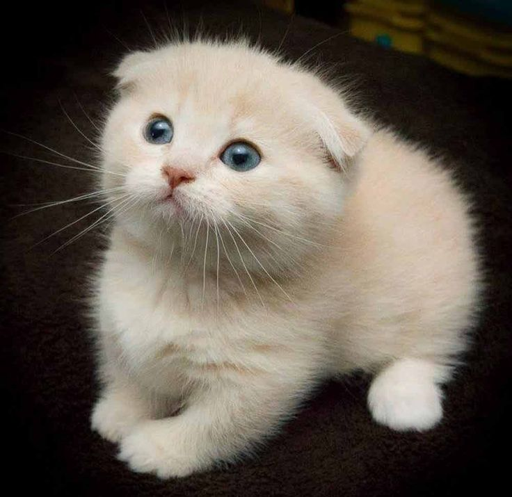 The very definition of cute…. #cat #cats #cute