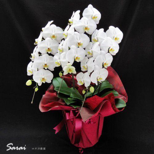 個人ユースで少し見栄を張りたいときにはこの胡蝶蘭 誕生日 開店  開院 金婚式 還暦などのプレゼントにおすすめです 胡蝶蘭販売Net http://www.amazon.co.jp/dp/B00RC8JDKG/ref=cm_sw_r_pi_dp_h0U4vb0BCH5CQ