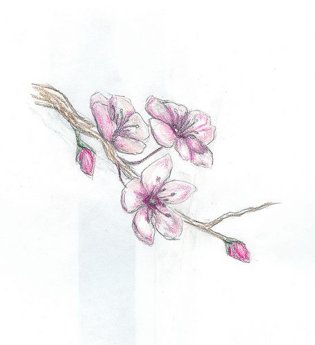 cherry blossom tattoo design by kat-tonic, via Flickr