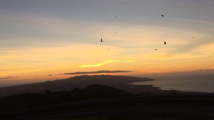 #VisitPortugal #TravelToAzores #Azores #PicoDaBarrosa' Sunset w/ flying #Birds #SaoMiguel
