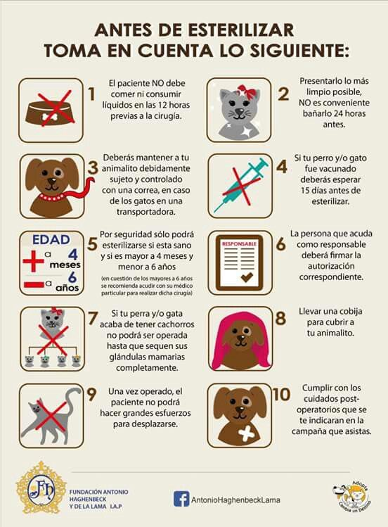 Esterilización de mascotas.