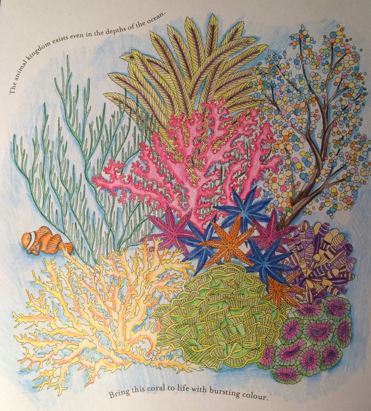 Coral Reef From Millie Marotta Colouring Book