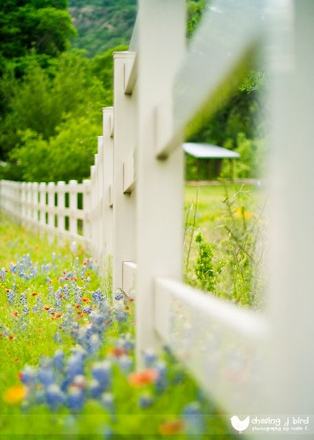 Texas Hill Country Fence