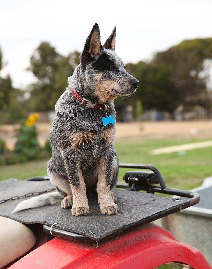 Cool Dog Breeds Breeds Coole Hunderassen Races De Chiens Cool Razas De Perros Geniales Dog Breeds That Dont Shed Dog In 2020 Dog Breeds Dogs Best Dog Breeds