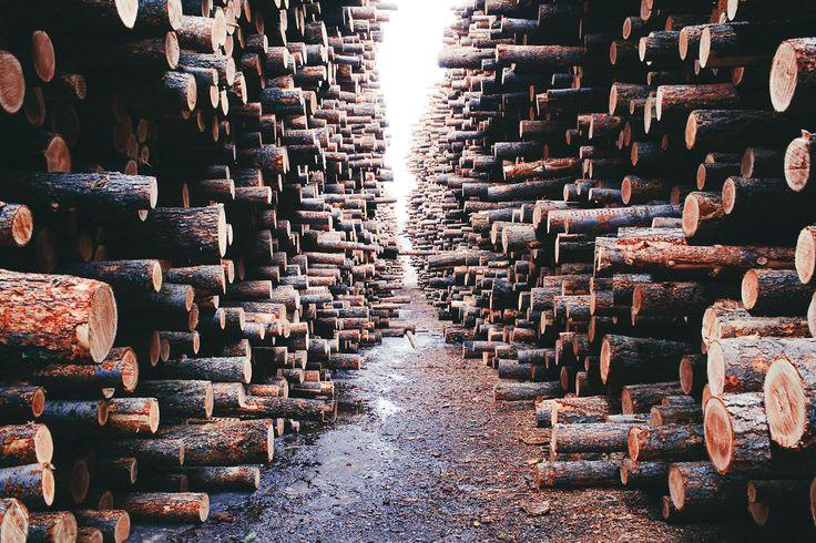 alexstrohl:  Logs — Williams Lake, BC