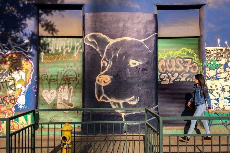 Arte urbano con perros - Santiago de Chile -