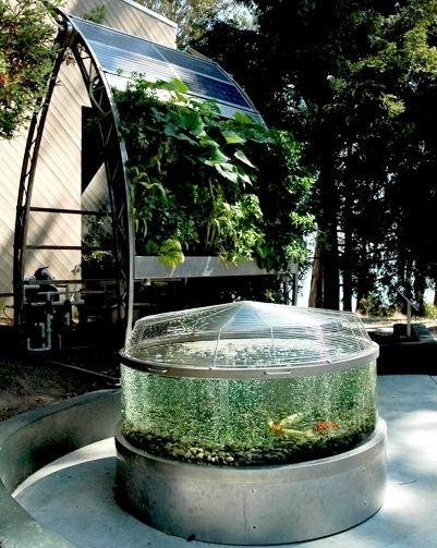 17 best images about aquaponics on pinterest gardens for Aquaponics fish pond