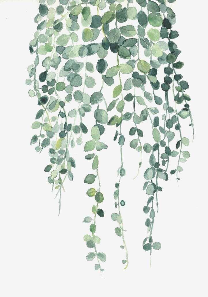 aesthetic vine background rachael in 2020