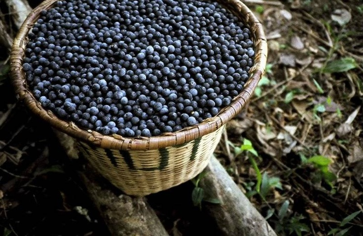 Açaí: Health Benefits, Tips and Product Picks!