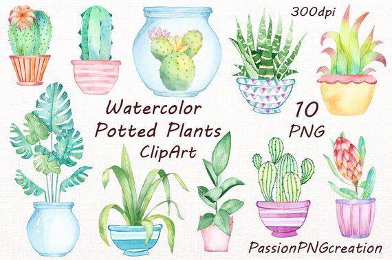 Watercolor Potted Plants Clipart Potted Plants Cactus Pots Etsy Flower Doodles Clip Art Watercolor Plants