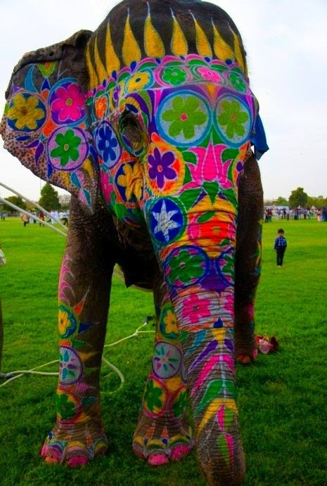 Elephant painted for the Jaipur Elephant Festival in India!