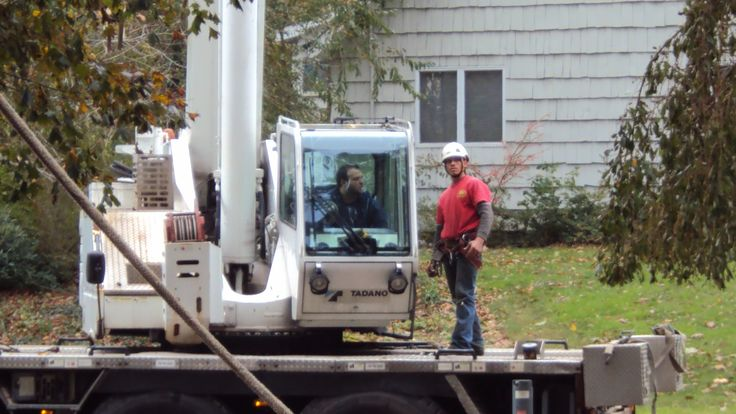 Tree Removal Nassau County Long Island