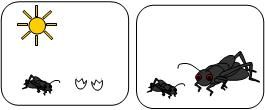 story sequencing cards for the very quiet cricket from makinglearningfun