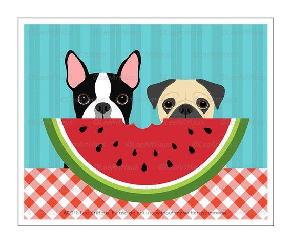 566d Dog Print Boston Terrier And Pug Dog Eating Watermelon Wall
