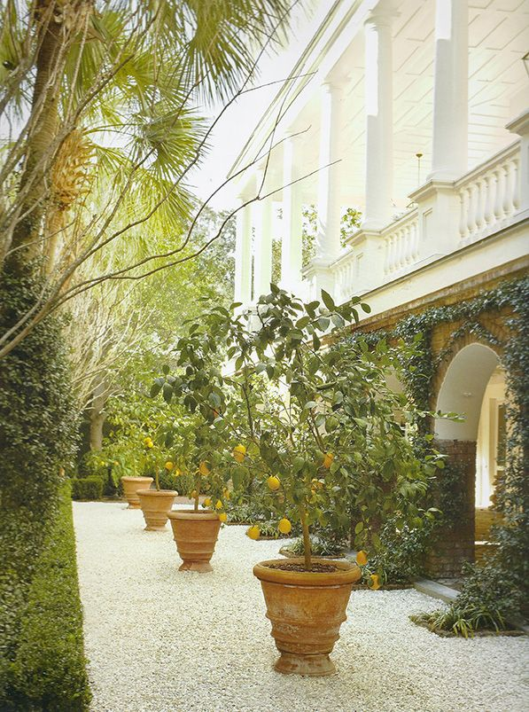 Potted Lemon Trees (Photo: G.P. Schafer Architect, The William Gatewood  House)