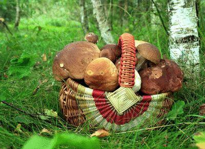 Az orosz organikus kiskertes tanyák (dácsák) mozgalmának története - Greenr - A zöld objektív