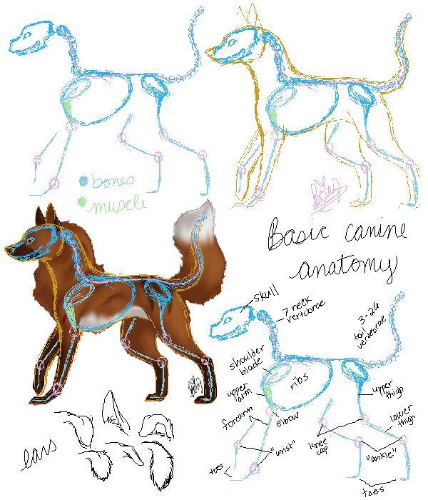 Dog Leg Bones Famous Dog 2018