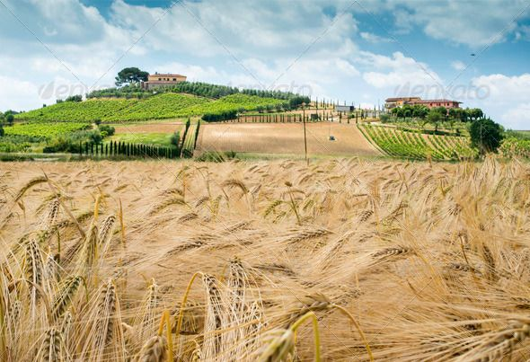 Cereal crops and farm in Tuscany - Stock Photo - Images