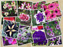 Garden Plant  1 Professional Pack, 400 seeds / pack, Mix Garden Petunia Shuttlecock Flower Horn Bonsai Flower Seed Bonsai Seed(China (Mainland))