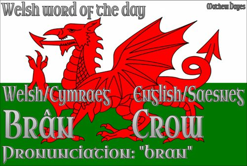 Welsh word of the day: Brân/Crow