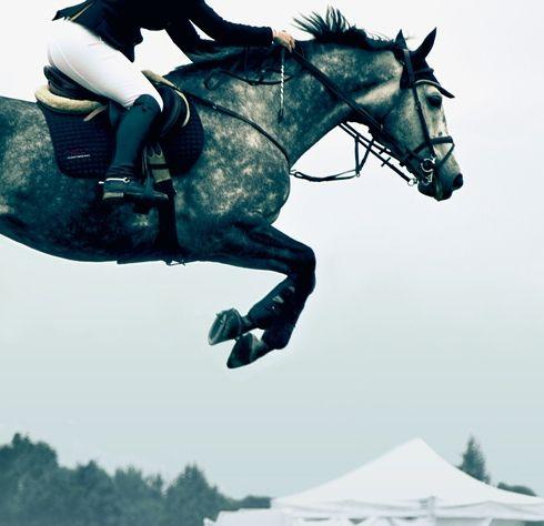 dapple: Jumping, Horses, Equestrian Life, Things, Equus, Photo, Animal