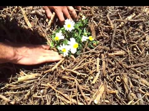 Gardening tips: How to apply mulch to your perennials  www.aussiewinners.com.au