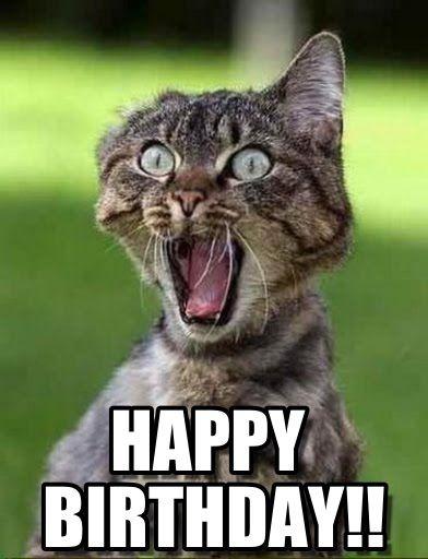 70118a2a33ee01a55769308d55747e48 funny shit funny stuff best 25 cat happy birthday meme ideas on pinterest happy,Happy Birthday Cartoon Meme