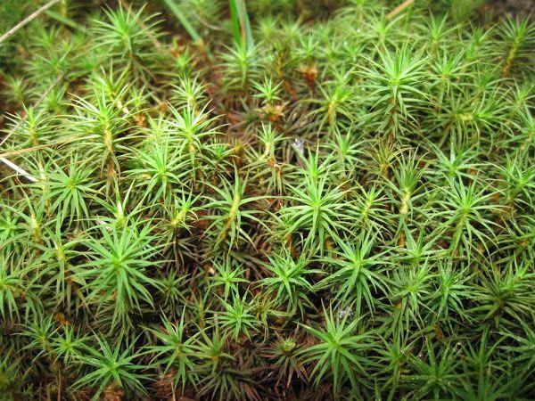 Górska roślinność