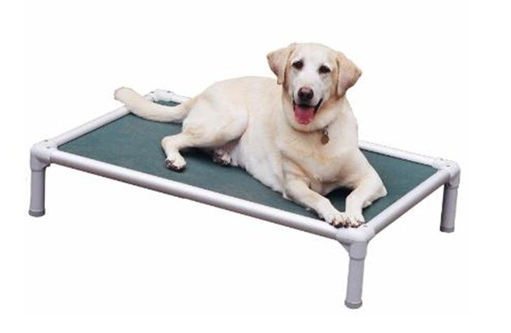 Elevated Dog Bed For Labrador Retriever