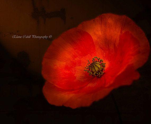 Poppy by peridotphotography on Etsy, €17.00