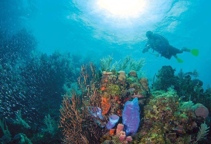 4079 best scuba diving magazine images on pinterest - Dive training magazine ...