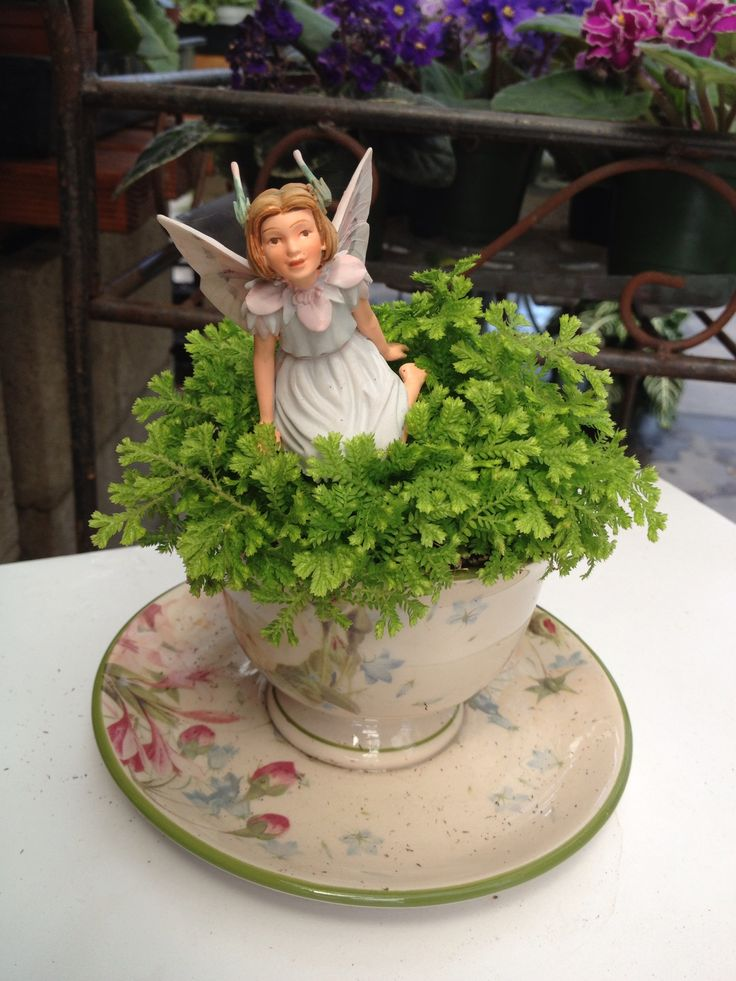 17 Best Images About Tea Cup Fairy Gardens On Pinterest