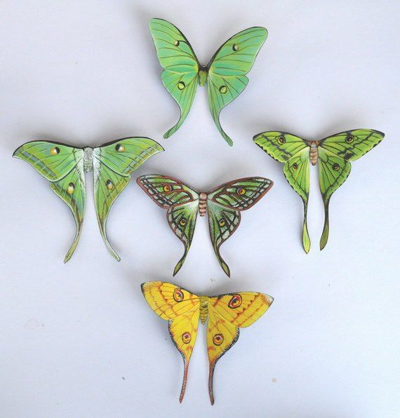 Moth Magnets Set Of 5 Insects Refrigerator Magnets Kitchen Decor Multi Color Home Decor 5 7 Inches Bedroom Decor Gifts With Images Moon Moth Luna Moth Tattoo Lunar Moth Tattoo
