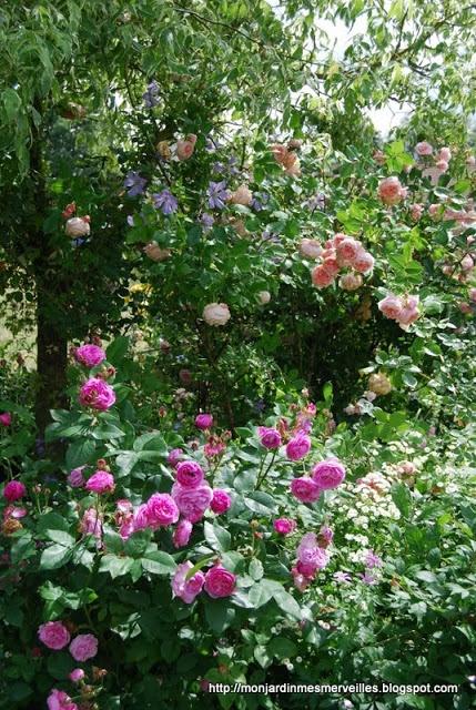 Les 2761 Meilleures Images Du Tableau Jardin Sur Pinterest Diy Beautiful Et Couleur