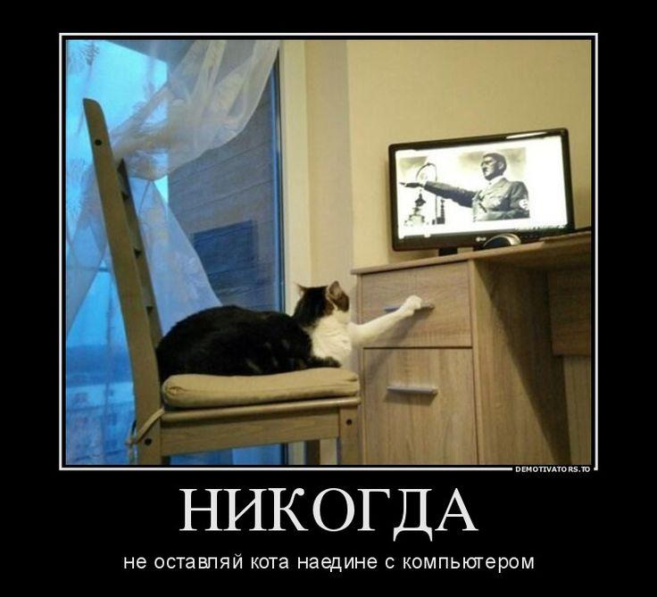 Кошка за компьютером демотиваторы