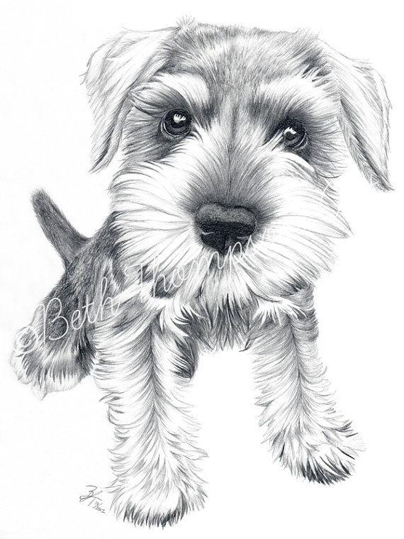 Schnozz  8x10 inch Art Print Schnauzer Dog by beththompsonart, $25.00