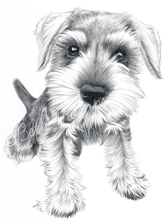 Los schnauzers son unos perros unicos. Amables, amorosos, preciosos y todas las cualidades necesarias .yo tengo una perrita de esa raza es blanca super tierna y preciosa la amo demasiado.