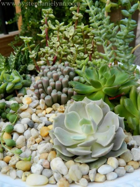 Succulent dish garden  I've been meaning to make one of these but haven't yet, maybe I will this year.